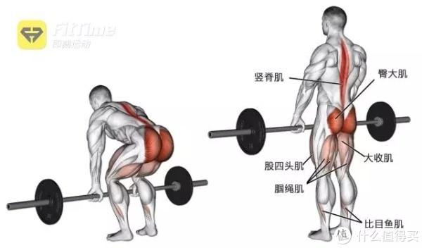 用厚实的背脊为家人铸就坚实的港湾!打造钢铁般的背部肌肉就看这篇!