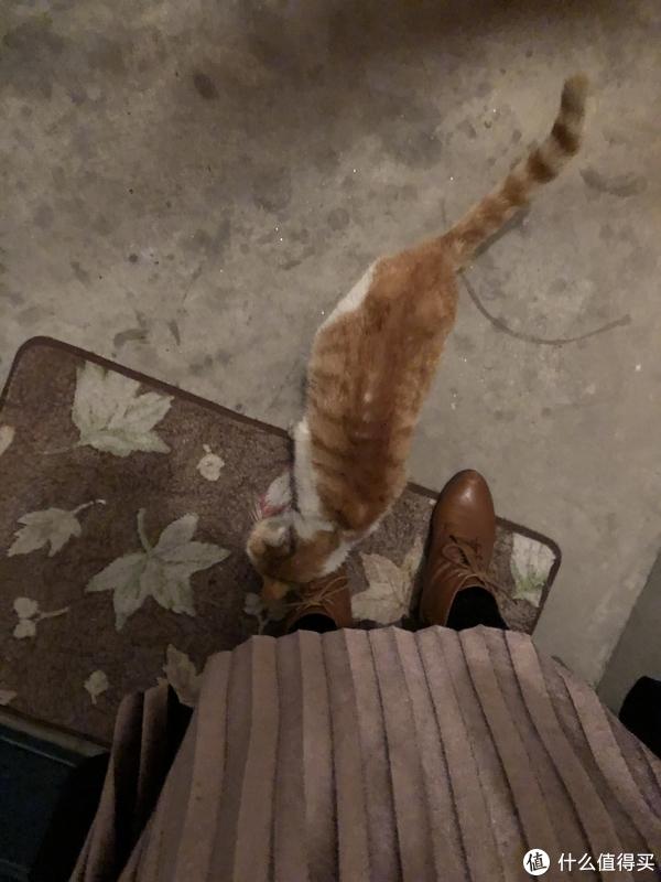 大雨夜求收留的流浪猫