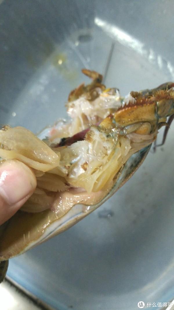啊,好痛!一只未成年龙虾的最后感悟