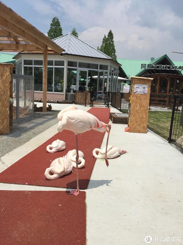 阿苏农场的动物王国