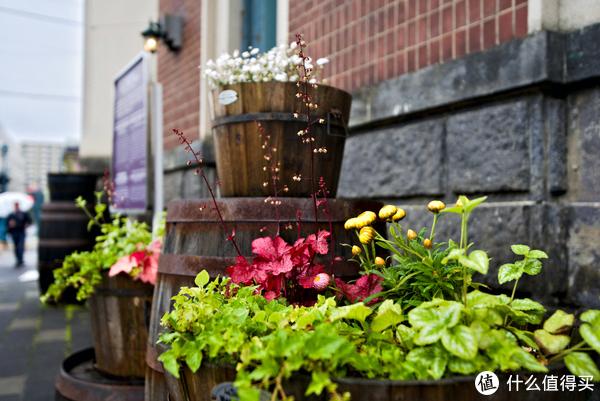 街边的木桶花坛