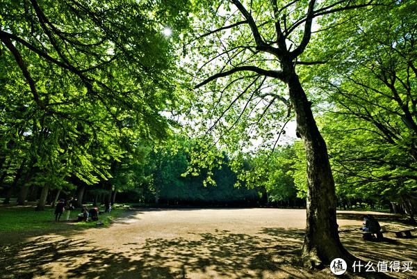 円山公园内的草坪