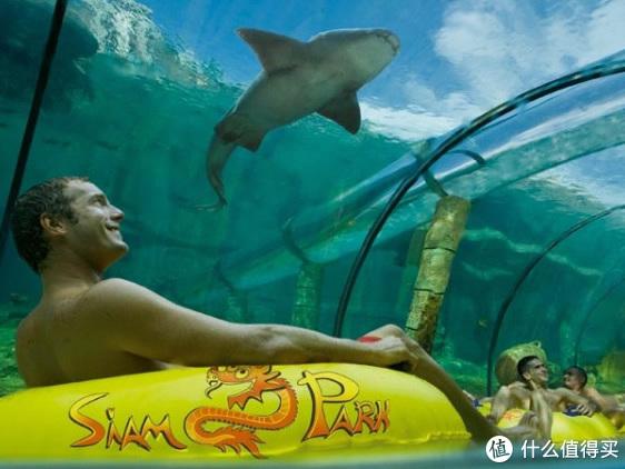 ▲俯冲下来之后还将穿过一条透明的鲨鱼池隧道(图自Wikimedia Commons)