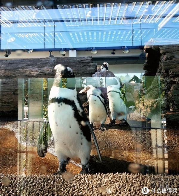 超级可爱的企鹅