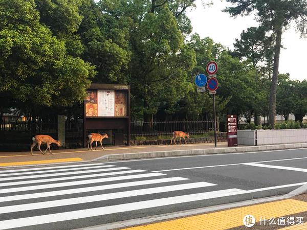 在街上信步闲游的鹿
