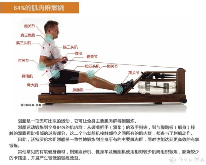 划船机锻炼的肌肉群