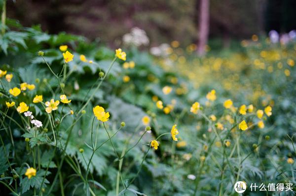 路边的野花 F3+Ektar100