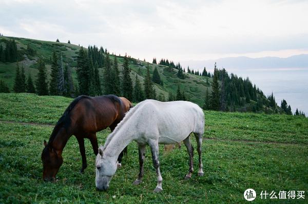 山坡上马儿在吃草