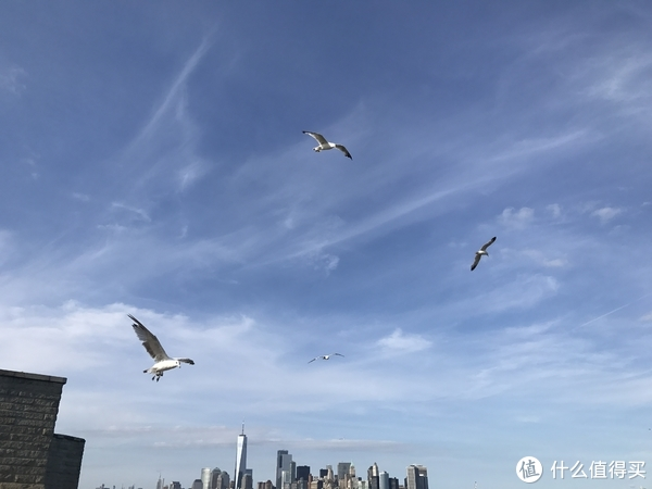 飞翔的海鸟