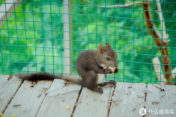 帝都京郊带娃解放天性,与2000多只森林的小精灵一起玩耍