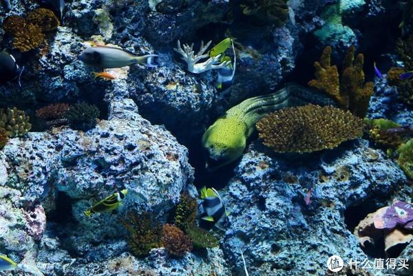 一日玩转Merlion公园、S.E.A海洋馆、夜间动物园