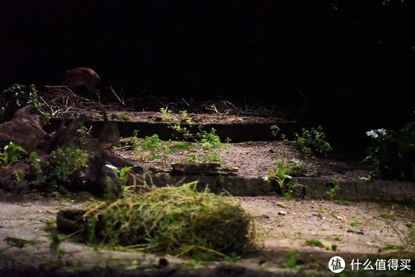 留意左上角的小鹿,其实这个动物园的鹿最多,路过了好几个不同品种鹿的区域,不过由于相机不给力,很多拍不到了。