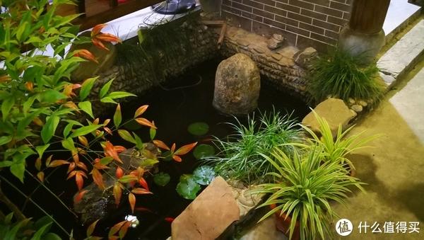 民宿庭院里的小池塘