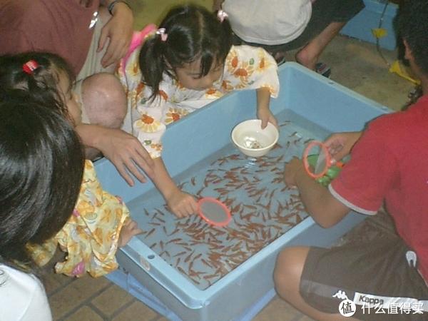 路边随便就能买到的草金鱼其实也是鲫鱼。图片:Mr.ちゅらさん / Wikipedia