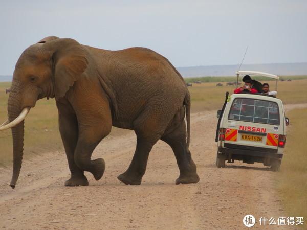 和我巴掌一样大的大象