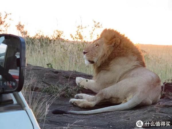 草原、野生动物,狮子犀牛大象,尽在印象肯尼亚!