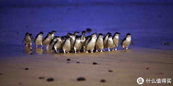 图片来源网络:呆萌的小企鹅十分可爱