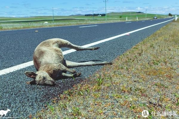 路边经常能遇上被撞死的小动物