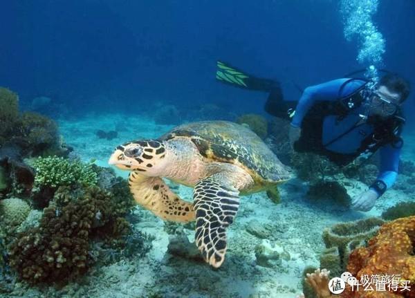 ▲与海龟共舞