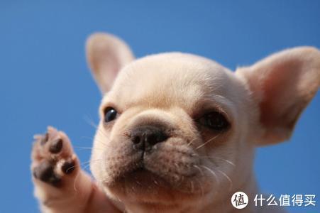宠物圈 篇六:宠物驱虫的正确姿势 内附驱虫药组合推荐