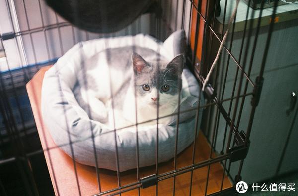 朋友养的小猫,叫阿波罗