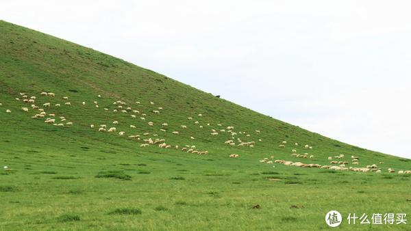 青青绿草地,每一口呼吸都是新鲜—内蒙古锡林郭勒自驾游干货分享