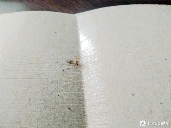 """推荐一种几乎""""万能""""的除虫工具—粘蝇纸"""