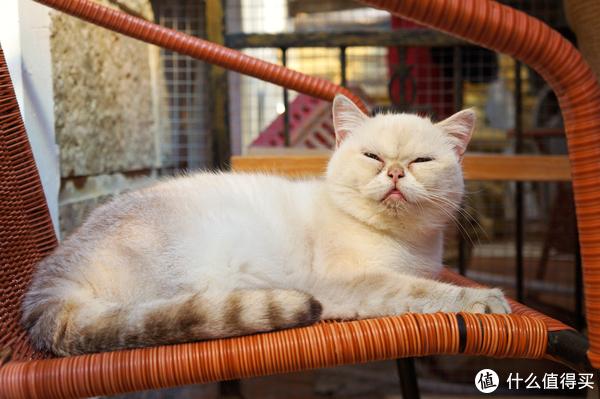 我们一起喵喵喵,100块一晚还能尽情撸猫几十只的酒店不来一发吗?
