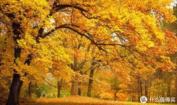 保湿|秋天到了,你选对保湿霜了吗?