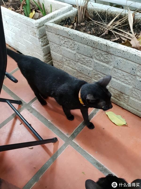 早餐撸猫~