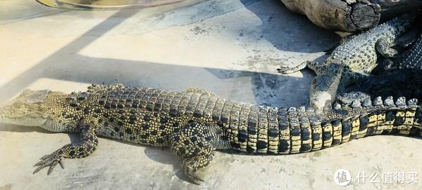 澳洲北领地的狂野与奇妙,一不小心就进了鳄鱼口