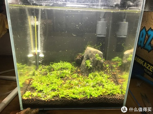 吃草从草缸开始—新手小白书桌30方小草缸养成记