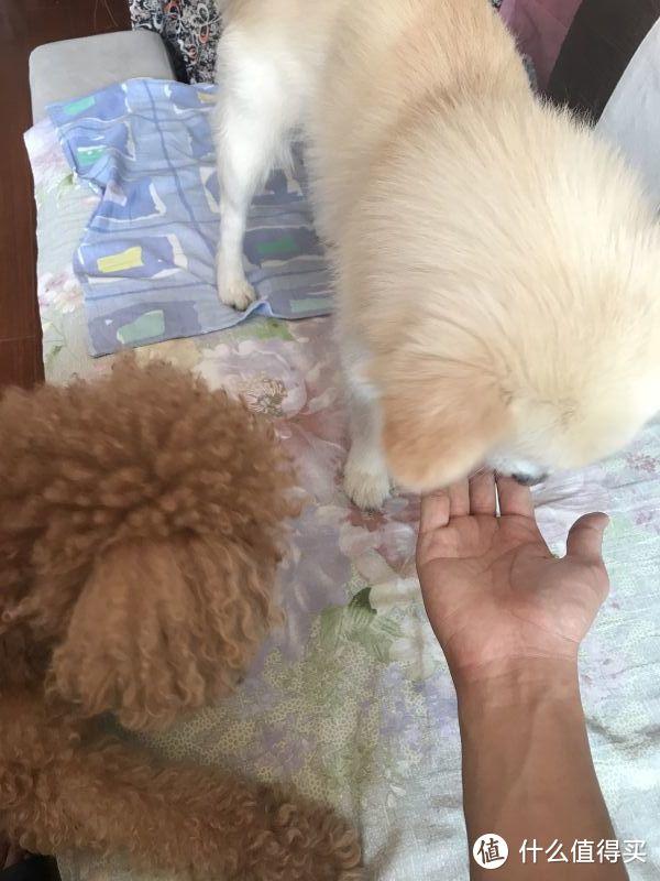 替家里的两个狗宝写众测,wowo汪星人宠物大礼包
