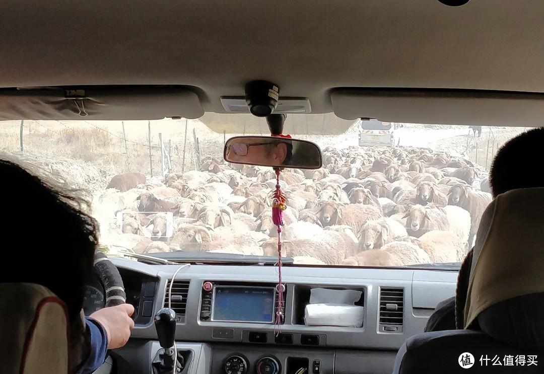 下山的羊群