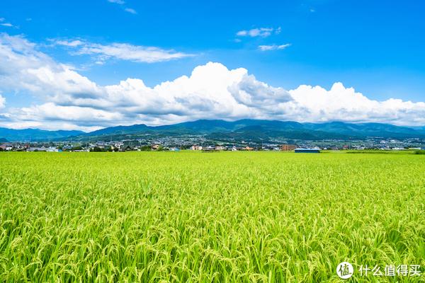 关于日本酒我想你应该知道这些(四) 米为酒之骨