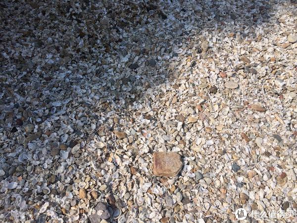好多贝壳,闲来无事也去捡了一些,但是太大意了,没想到还会涨潮...其实想想不涨潮这些贝壳怎么能被冲刷这么远。代价就是在河边湿了鞋...