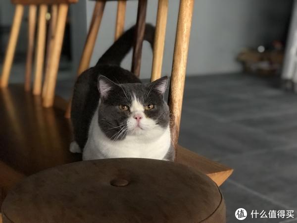 不完全养猫补坑指北,给养猫新手的一些避雷建议