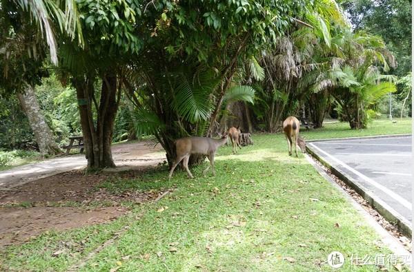 游客中心附近的鹿