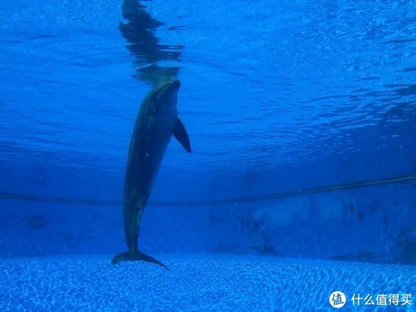 寂寞的海豚