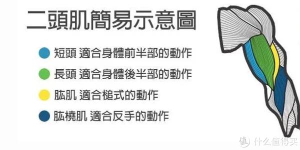 """《真健》 篇九:袖口是用来撑破的,打造完美的""""麒麟臂""""(肱二头篇)"""