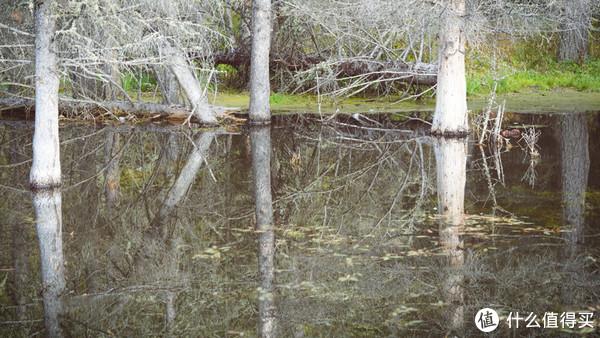 绝美天堂,春夏秋冬7进喀纳斯,一篇完全脱水的纯干货指南