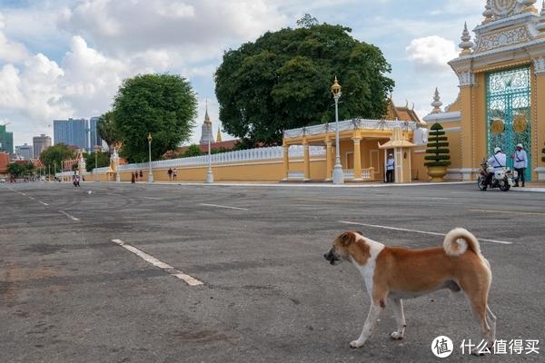 大皇宫外的小狗