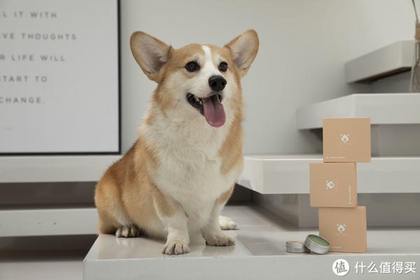 捡屎官的终极疑问:如何提高狗生幸福感!这些细节不可忽略!