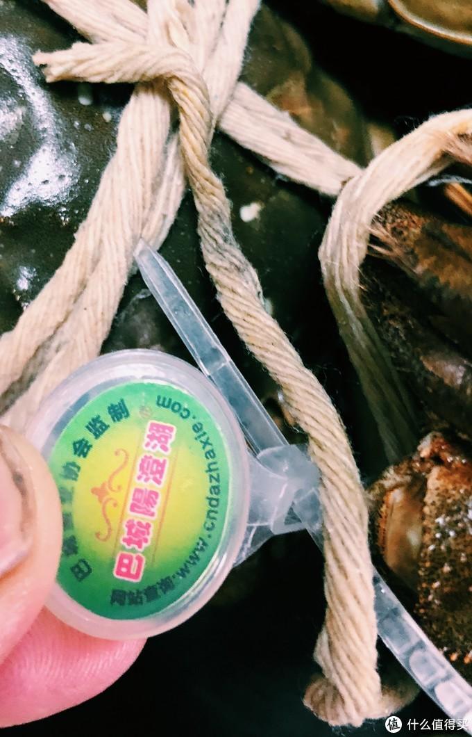 巨石黄金重,蟹肥白玉香——今锦上 阳澄湖大闸蟹试吃体验
