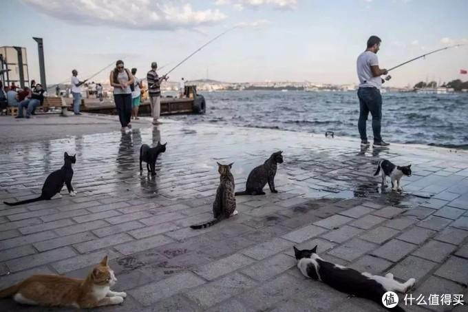 这座横跨欧亚大陆的独特城市,正确的打开方式是吸猫