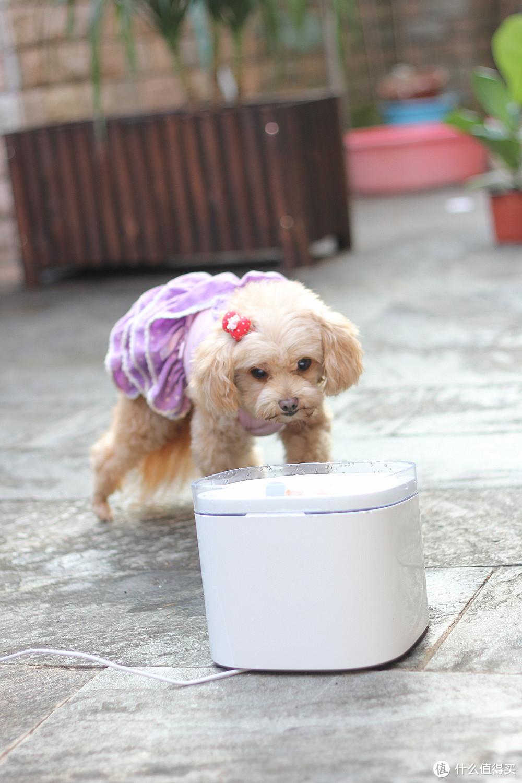 选择猫猫狗狗宠物饮水机,让你的爱宠喝出健康,喝出乐趣