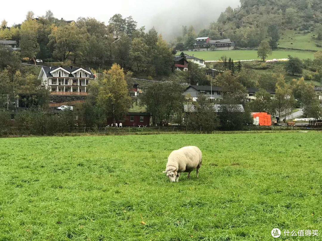 在Flåm(弗洛姆)的酒店---窗外还有羊,十分的农村
