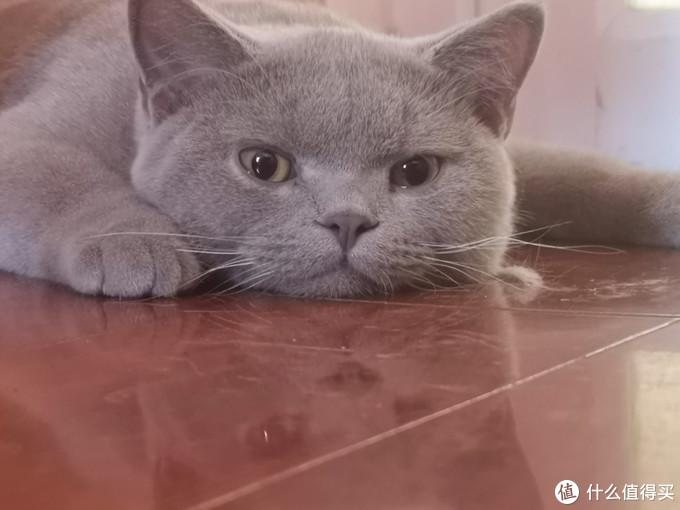 猫爸猫妈集结号,猫咪用品什么值得买?