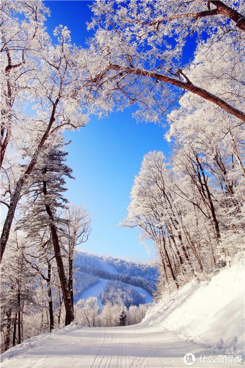 图片来源于长白山国际度假区官网