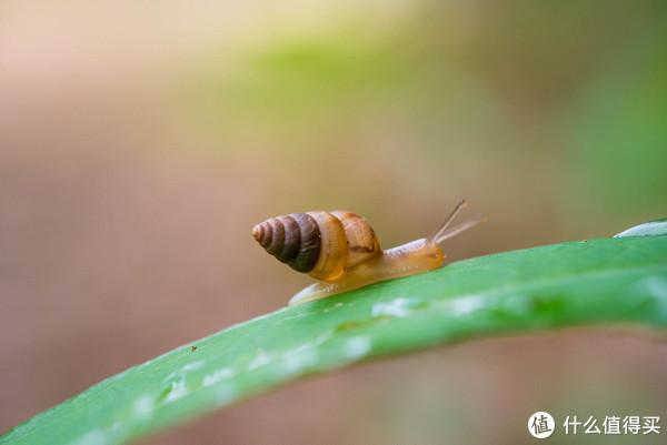 蜗牛 老蛙60MM
